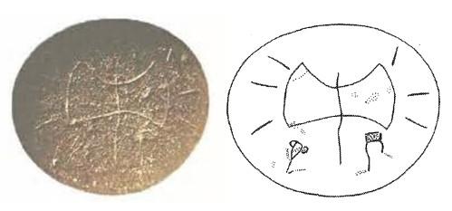Kafkania pebble.A